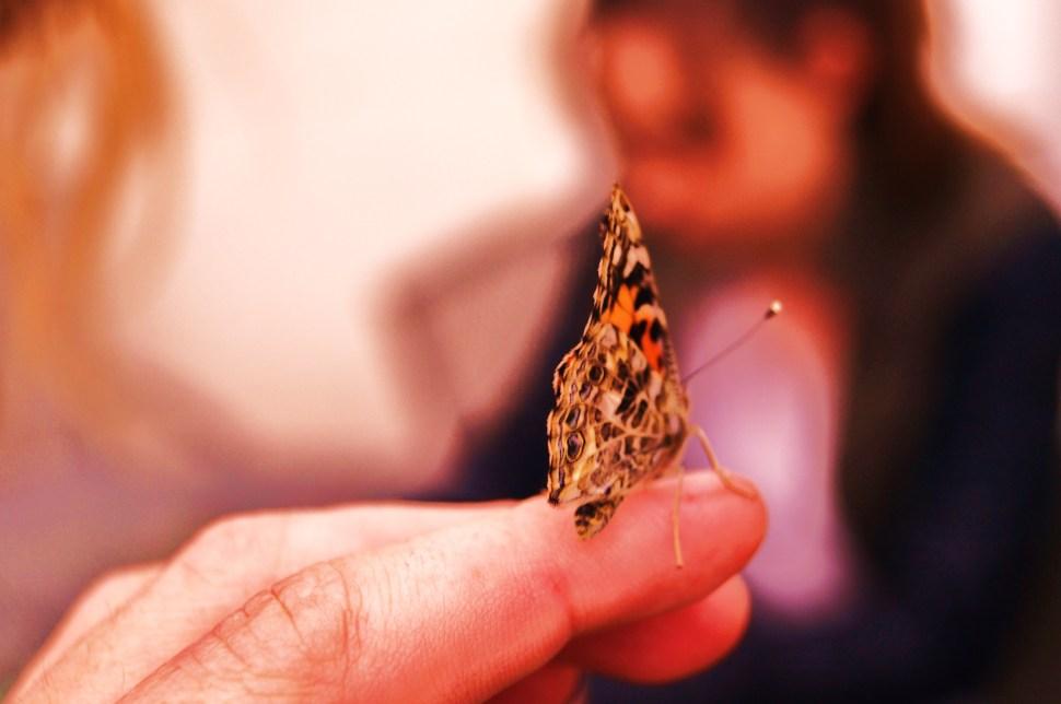 Butterfly Wonders