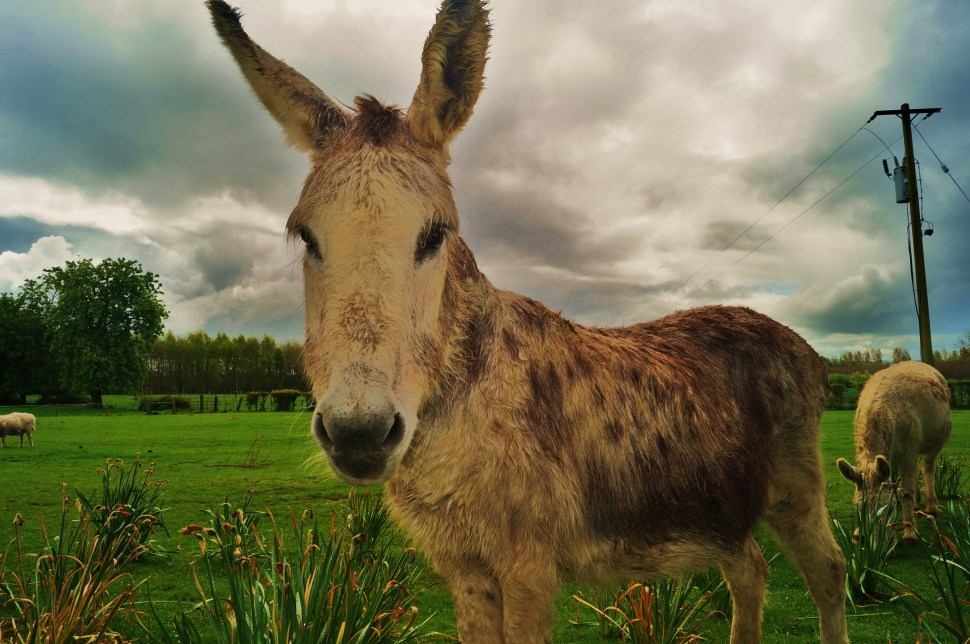 Donkey up close and Personal