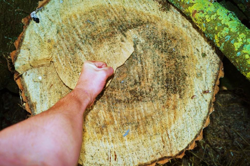 Fist on Wood