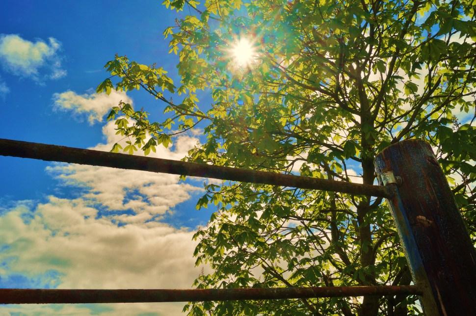 Gate and Tree Sun
