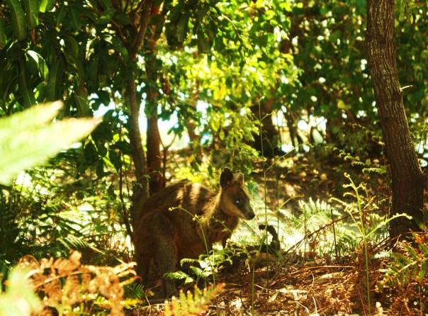 My Kangaroo Friend