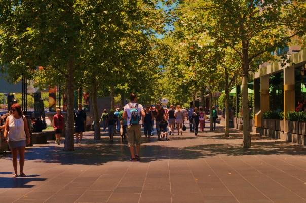 Streets of Tree Shade
