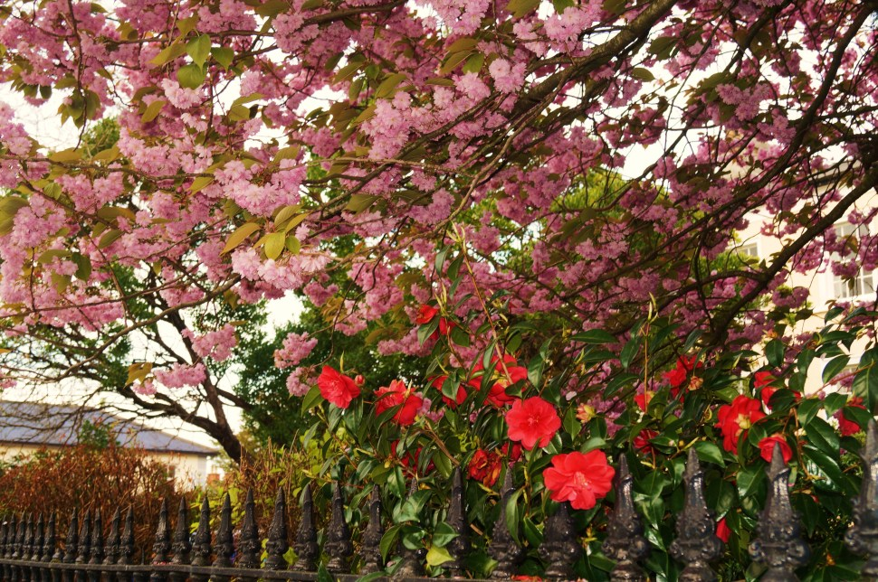 Pink and Red Flowers on Railing