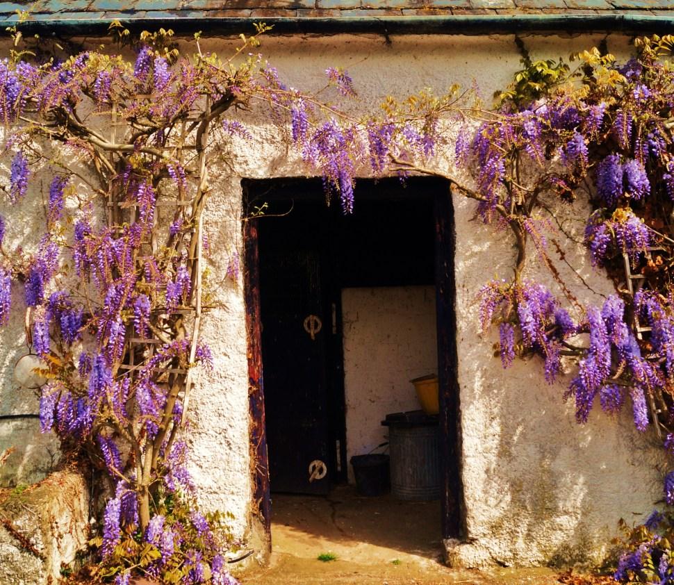 Purple Flowers Door