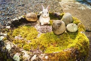 Rabbit and Stones