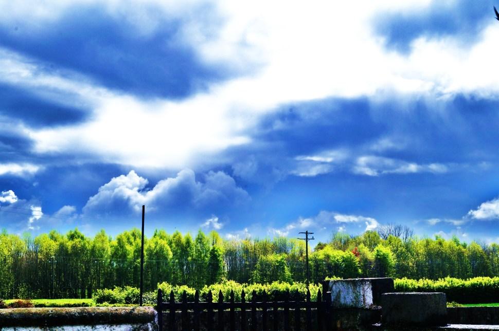 Skyline and Trees