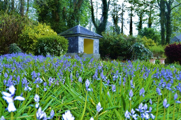 Sunhouse and Bluebells
