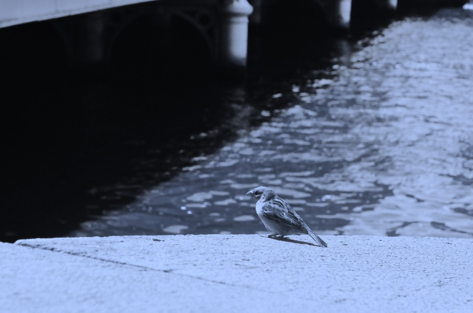 Swallow by the River