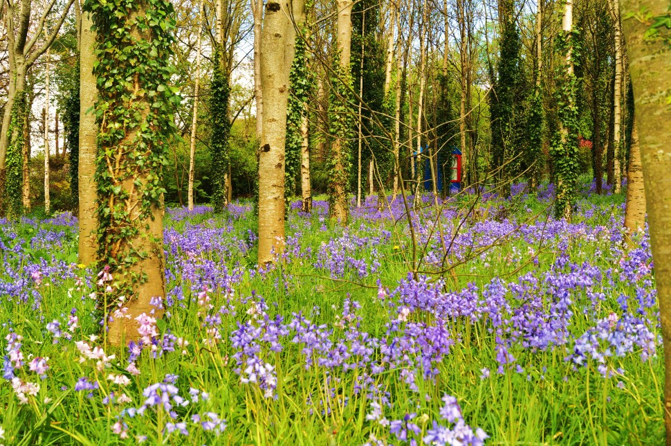 Treehouse Hiding in the Bluebells