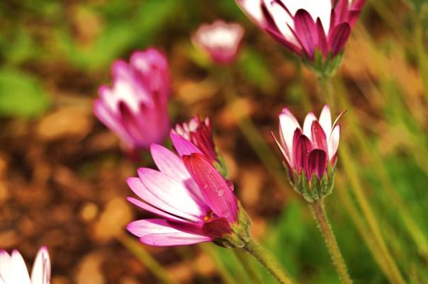Water in Pink Flowers