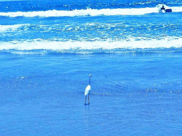 A Bird and a Surfer