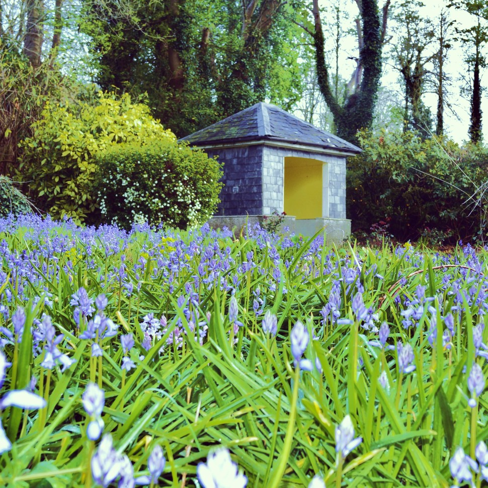 Bluebells and the Sunhouse