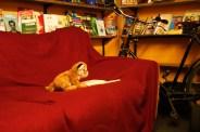 Brixton Book Shop