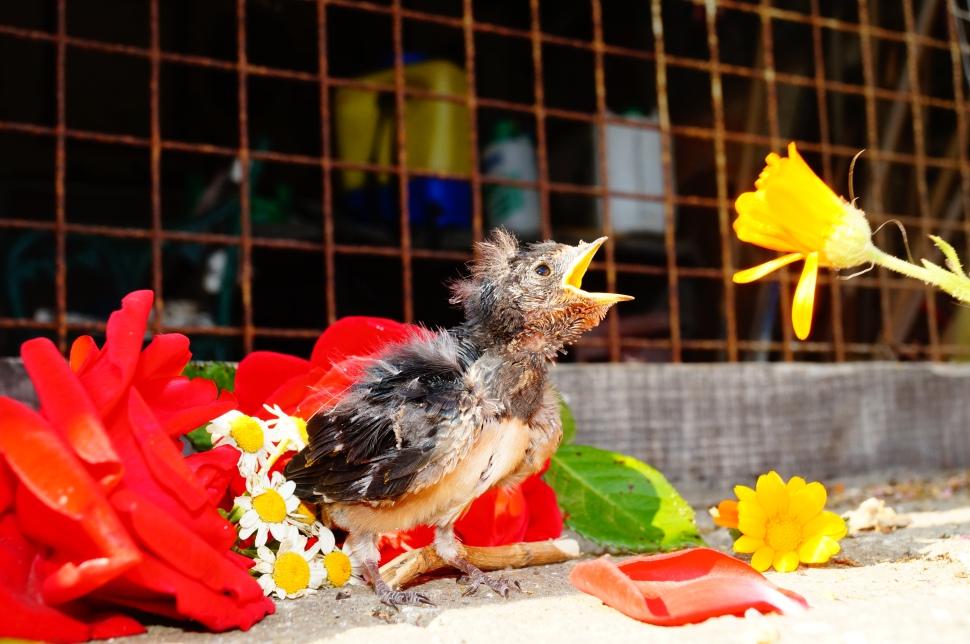 Birdie Beak Open flower