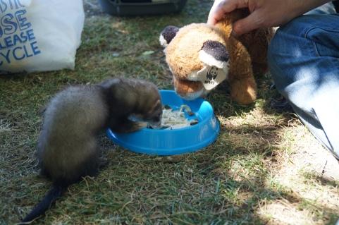 Me and A Ferret...no big deal