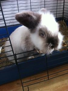 Rooney The Rabbit