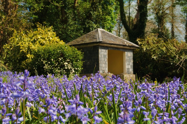 Bluebells and the Sunhouse Sunny