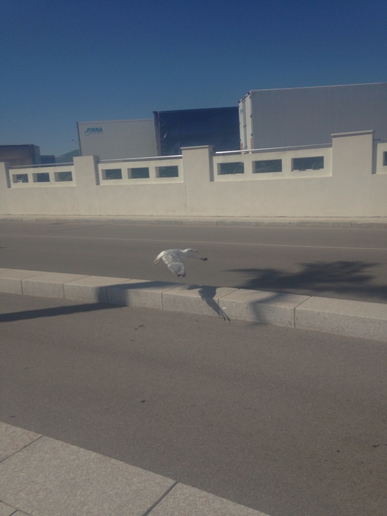 He then fed this Seagull who had a broken leg who stayed with him and kept him company