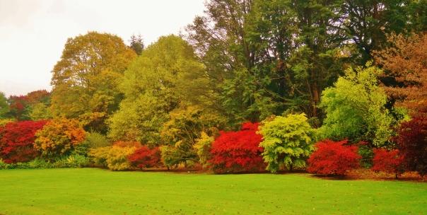 A Row of Colour