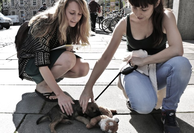 Puppy and girls
