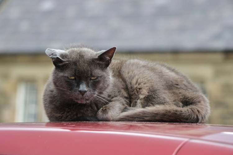 Cat wasn't happy