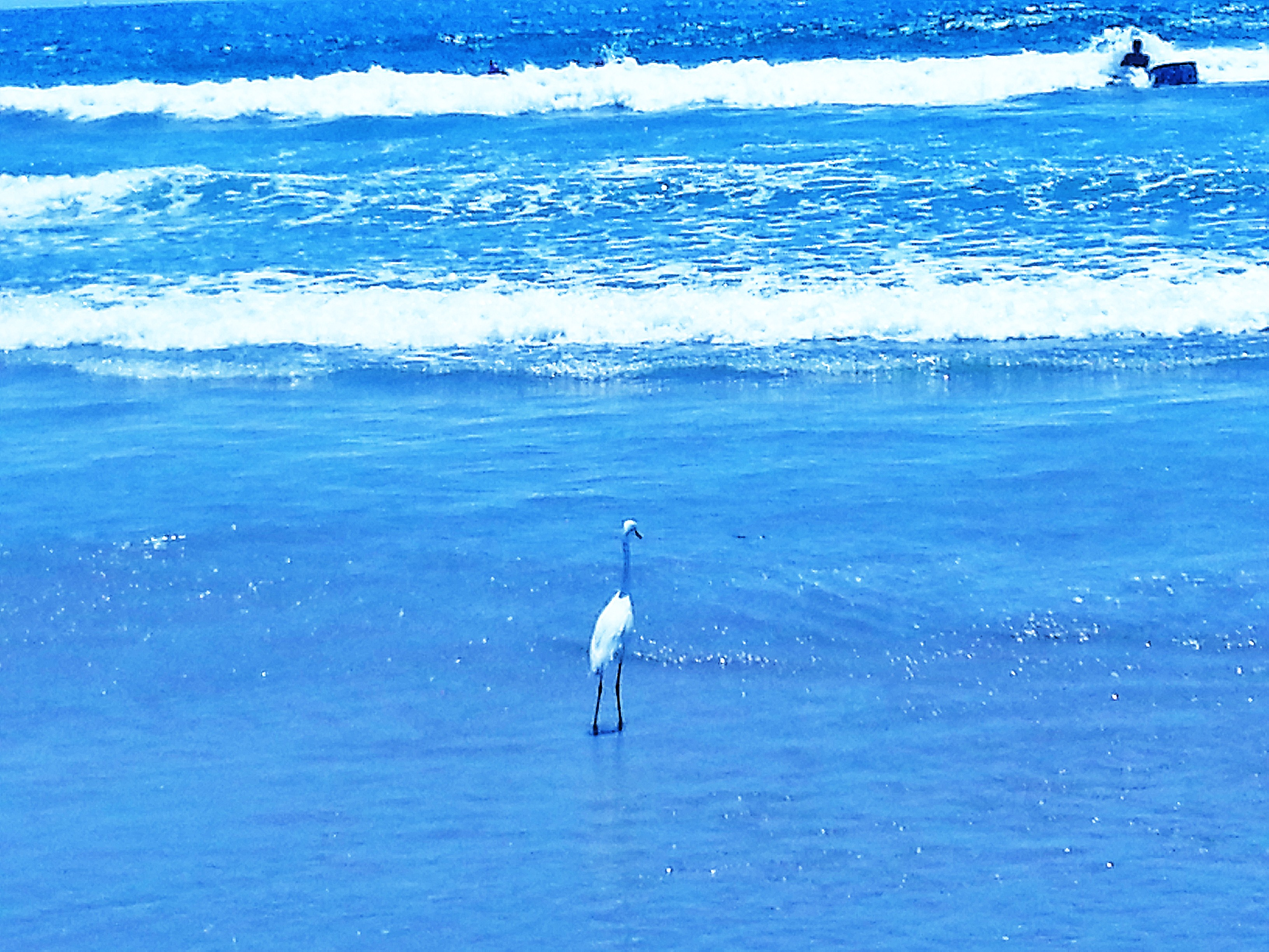 Bird on LA Beach